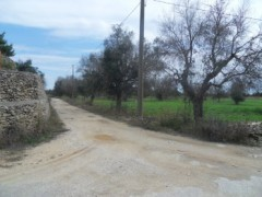 Galatone farmland in c. from Camascia - 1