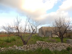 Galatone, agricultural land with ruin - 5