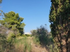 Galatone agricultural land with ruins of about 25sqm - 3